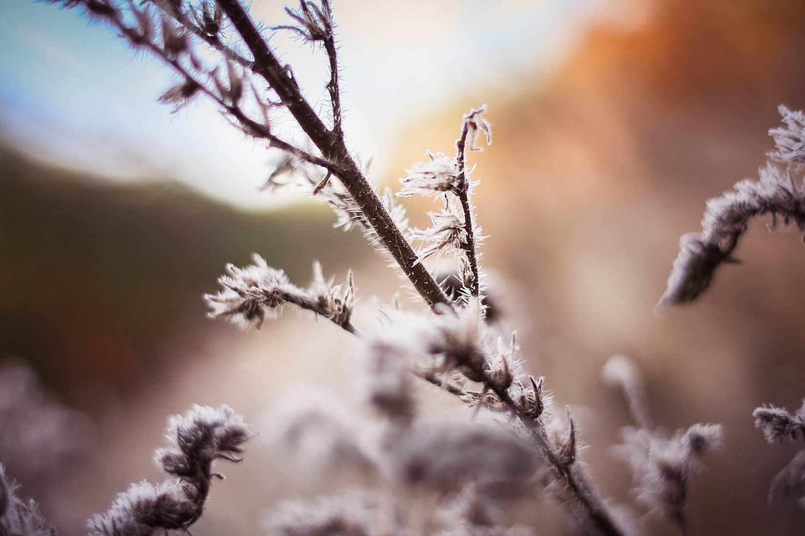 měsíc Leden
