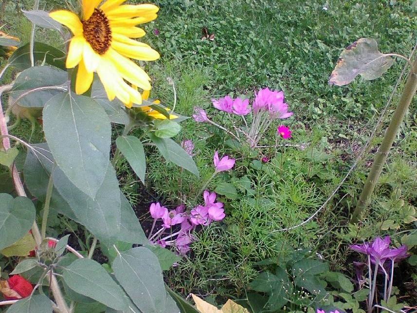 Pomalu nám podzim poroučí, ať se už léto loučí …