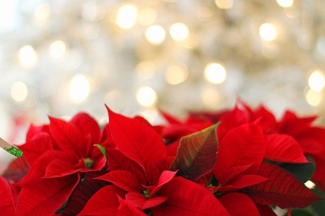 Vánoce, svátky klidu, pohody v rodinném kruhu