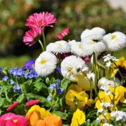 Jaro se hlásí, sluníčko začíná hřát