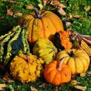 Podzim je zde, vyzkoušejte dýňový kompot nebo dýňové placičky