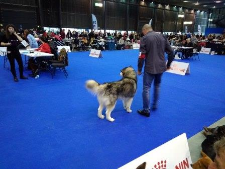 Mezinárodní výstava psů DUO CACIB