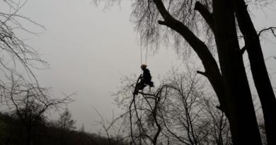 Zimní řez stromů